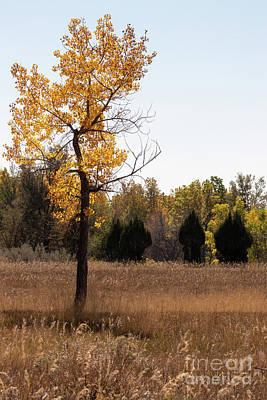 Photograph - Autumn Tree by Nicki Hoffman