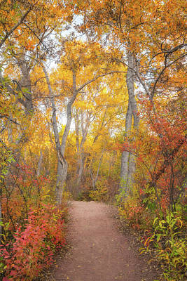 Royalty-Free and Rights-Managed Images - Autumn Walk by Darren White