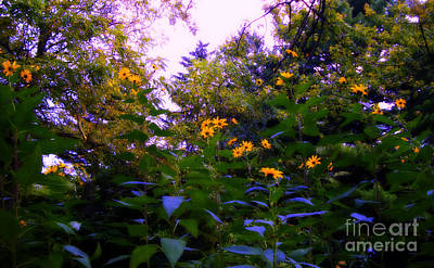 Frank J Casella Royalty-Free and Rights-Managed Images - Autumn Yellow Flowers Morning Sunlight by Frank J Casella