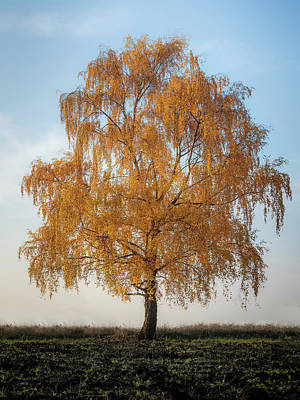 Photograph - Autumnal Tree by Andrew George Photography