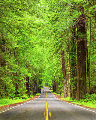 Photograph - Avenue of the Giants, Redwood. by John Morris