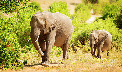 Royalty-Free and Rights-Managed Images - Baby Elephant in Africa by THP Creative