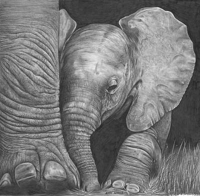 Animals Drawings - Baby Elephant by Jerry Winick