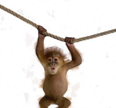 Animals Drawings - Baby Orangutan Monkey Childs Room by David Dehner