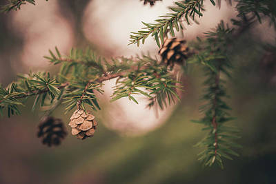 Photograph - Baby Pinecones Light by Jessica Nelson