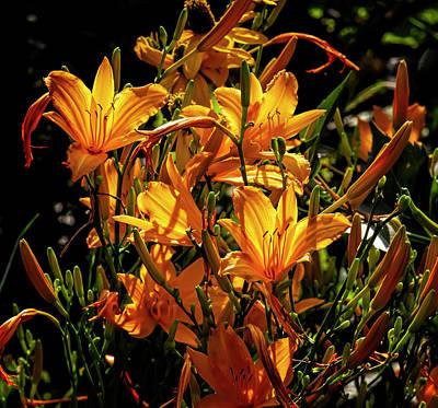 The Bunsen Burner - Back Lit Lilies by Robert Ullmann