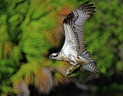 Staff Picks Judy Bernier Rights Managed Images - Back to the nest. Royalty-Free Image by Stuart Harrison
