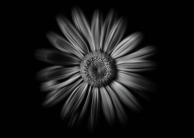 Wild Horse Paintings - Backyard Flowers In Black And White 52 Flow Version by Brian Carson