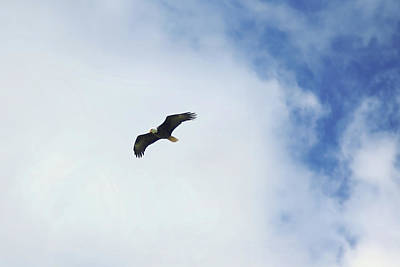 Animals Photos - Bald Eagle in Flight by Steve Keyser