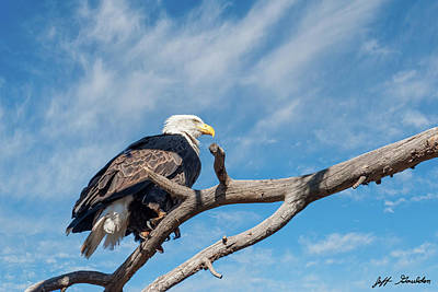 Photograph - Bald Eagle Perched in a Dead Tree by Jeff Goulden