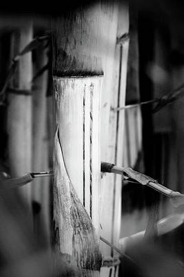 Fruits And Vegetables Still Life - Bamboo by Aaris K