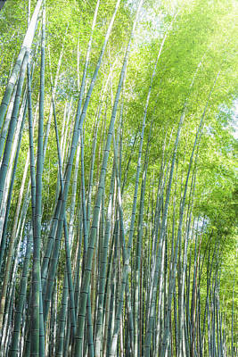 Abstract Works - Bamboo Forest Kyoto Japan II by Joan Carroll