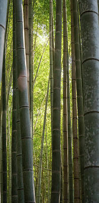 Louis Armstrong - Bamboo Forest Kyoto Japan by Joan Carroll