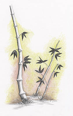 Drawing - Bamboo by Judy Horan