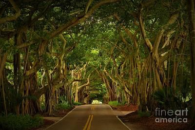 Photograph - Banyan Road by Keri West