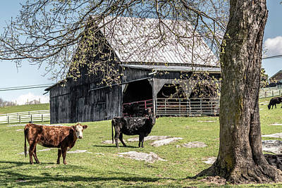 Animals Royalty-Free and Rights-Managed Images - Barnyard Spring by Jim Love