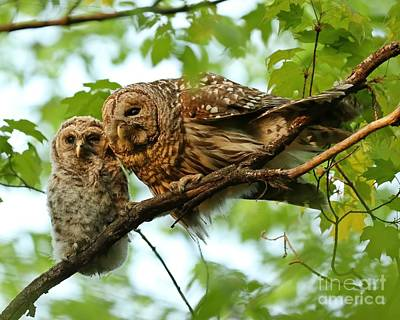 Celebrity Pop Art Potraits - Barred owl mom and baby  by Heather King