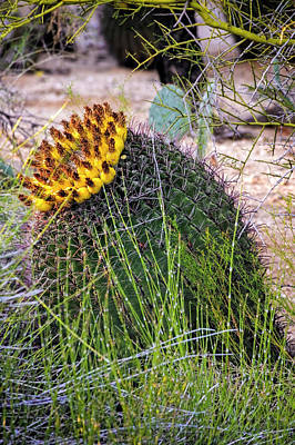 Mark Myhaver Rights Managed Images - Barrel Cactus v1929 Royalty-Free Image by Mark Myhaver