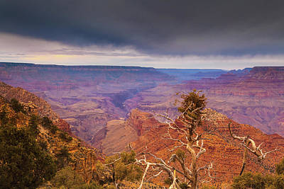Royalty-Free and Rights-Managed Images - Barren Tree Grand Canyon by Andrew Soundarajan