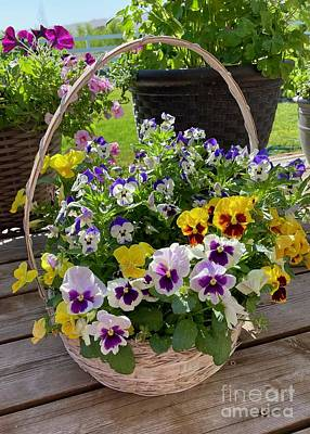 Truck Art Rights Managed Images - Basket of Violas Royalty-Free Image by Carol Groenen