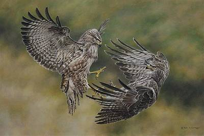 Animals Paintings - Battling Buteos by Alan M Hunt