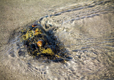 Miles Davis - Beach Combing 6 Snails Sun Bathing by Michael Saunders
