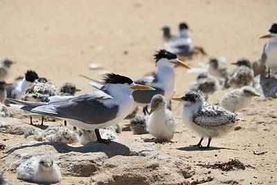 Animals Royalty-Free and Rights-Managed Images - Beach Families by Michaela Perryman