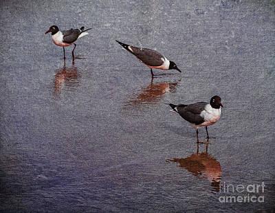 Water Droplets Sharon Johnstone - Beach Gulls by Nick Zelinsky Jr