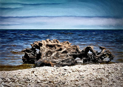 Photograph - Beached Tree by Allyson Schwartz