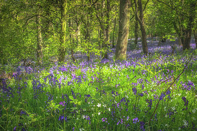 Queen - Beaconwood Bluebells by Chris Fletcher