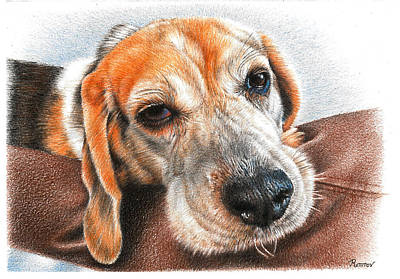 Fruits And Vegetables Still Life - Beagle Snuggles by Casey