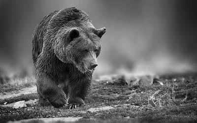 Mixed Media - Bear Dream by Marvin Blaine