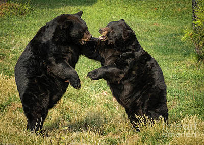 Animal Portraits - Bear Fight by Mitch Shindelbower