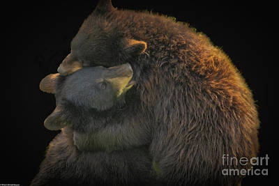 Rights Managed Images - Bear Hug Royalty-Free Image by Mitch Shindelbower