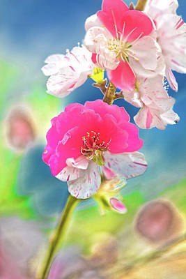 Royalty-Free and Rights-Managed Images - Beautiful Blossoms by Az Jackson