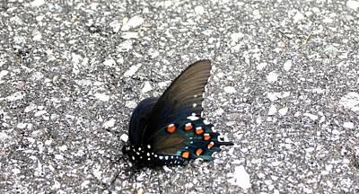 Photograph - Beautiful Butterfly by Shonda Mcbride