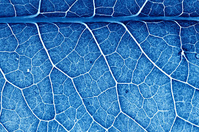Royalty-Free and Rights-Managed Images - Beautiful Closeup Plant Texture Background by Julien