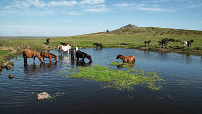 Anne Geddes - Beautiful Dartmoor ponies with foals, take a refreshing dip and  by Matthew Gibson