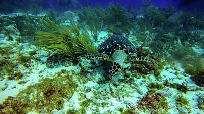 Modern Man Surf - Beautiful marine life corals in Cancun Mexico North America by Ujjwal Shrestha