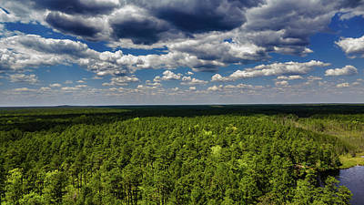 Pasta Al Dente - Beautiful Pine Barrens Landscape by Louis Dallara