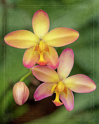 Book Quotes - Beautiful Pink and Yellow Ground Orchids by Teresa Wilson