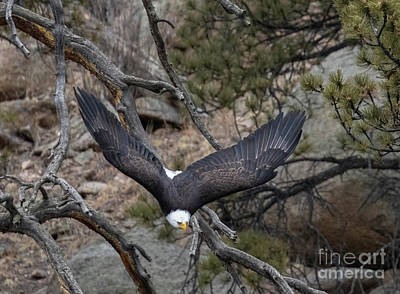 Steven Krull Royalty-Free and Rights-Managed Images - Beauty in Flight by Steven Krull
