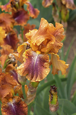 Modern Man Rap Music - Beauty Of Irises. Autumn Leaves by Jenny Rainbow