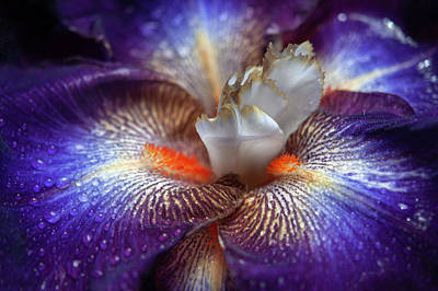 Design Pics - Beauty Of Irises. Chaos Theory Macro by Jenny Rainbow