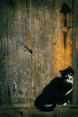 Winter Animals - Beauty the Barnyard Stray by Joann Vitali