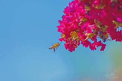 License Plate Skylines And Skyscrapers Rights Managed Images - Bee Flying into Magenta Flowers Royalty-Free Image by Lucia Vega