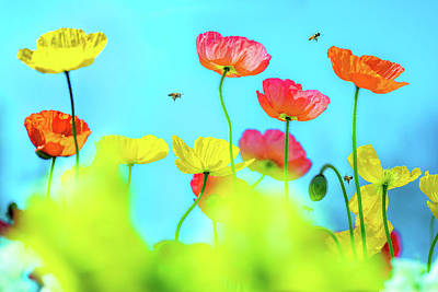 Royalty-Free and Rights-Managed Images - Bee Haven by Az Jackson