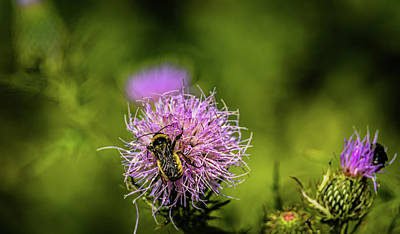 Photograph - Bee on a flower by Mike Cox