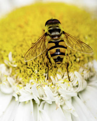 Royalty-Free and Rights-Managed Images - Bee Very Close by Rebecca Cozart