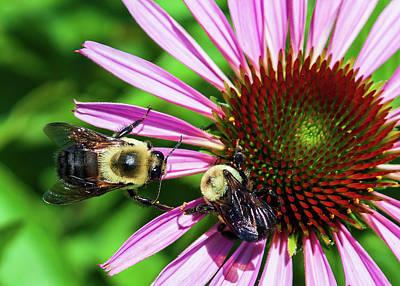 Lake Life - Bees at Work by David Beard